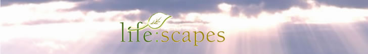 Welcome to life:scapes. An escape from television news shows or soap operas. For organizations where the TV is on all day: Hospitals, ICUs, nursing homes, doctor's offices. Each life scapes dvd is one hour long. Build your own in-house network one dvd at a time. View a demo of the summer dvd on this page!